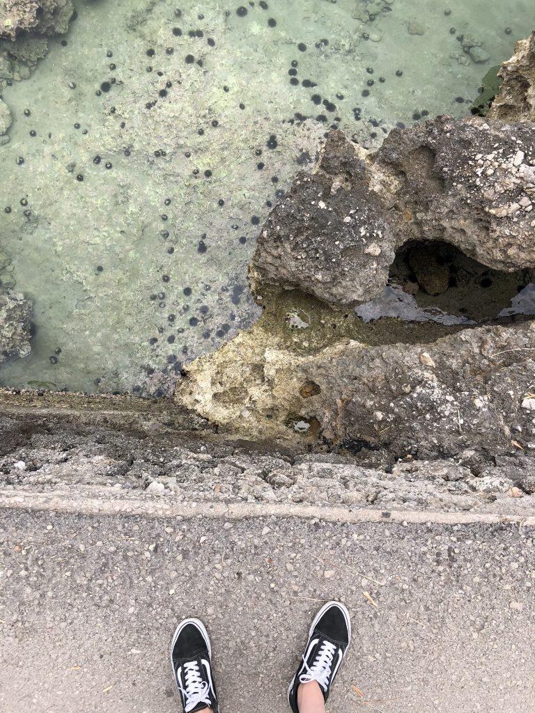 Zee-egels Griekenland