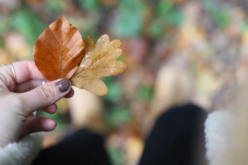 Bovenaf helemaal herfst